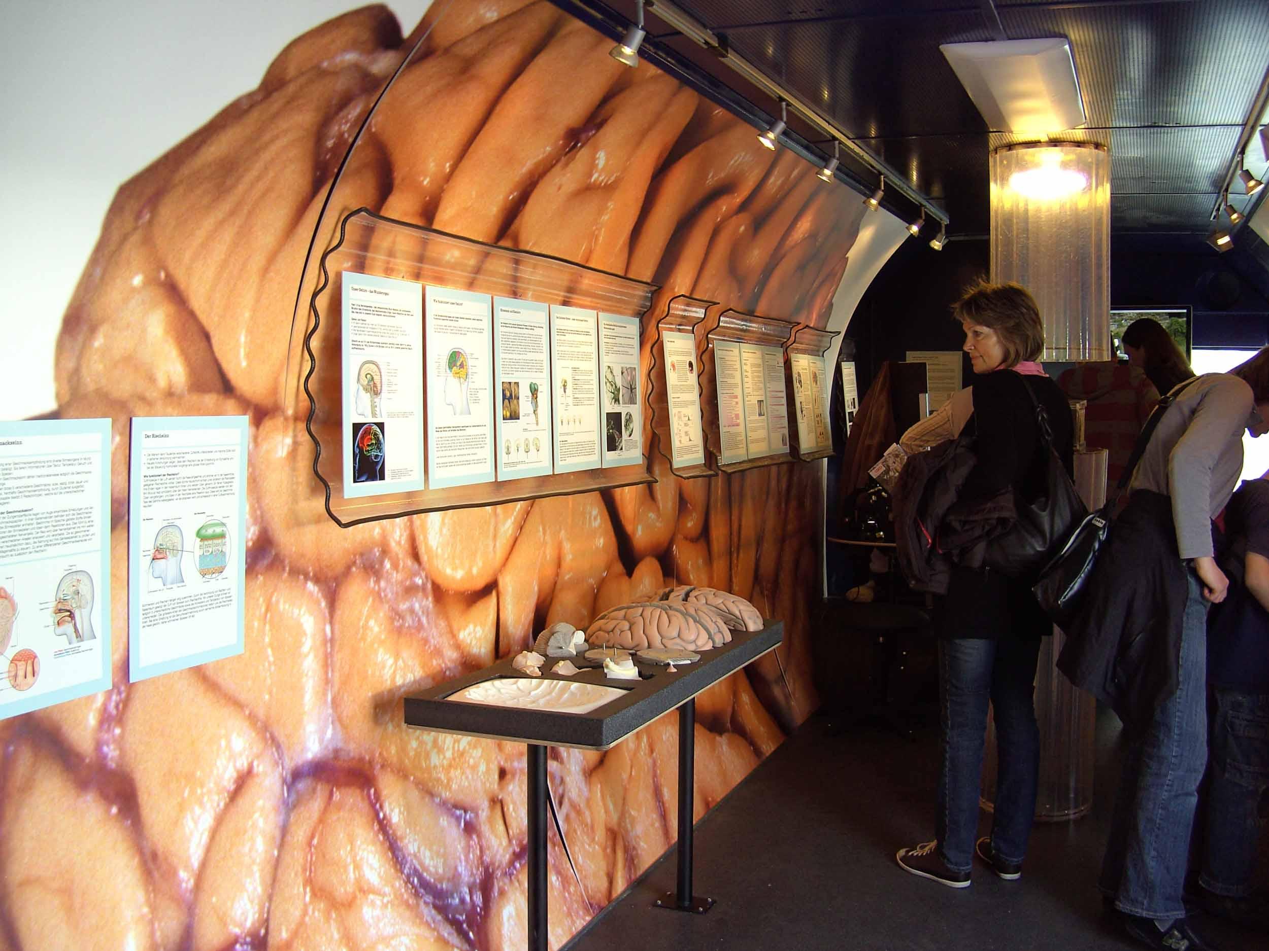 inside the brain bus