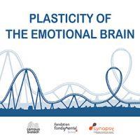 flyer plasticity of the brain