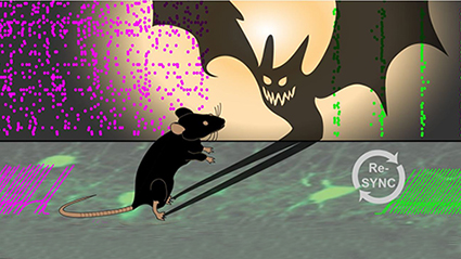 Resynchronizing neurons to erase schizophrenia