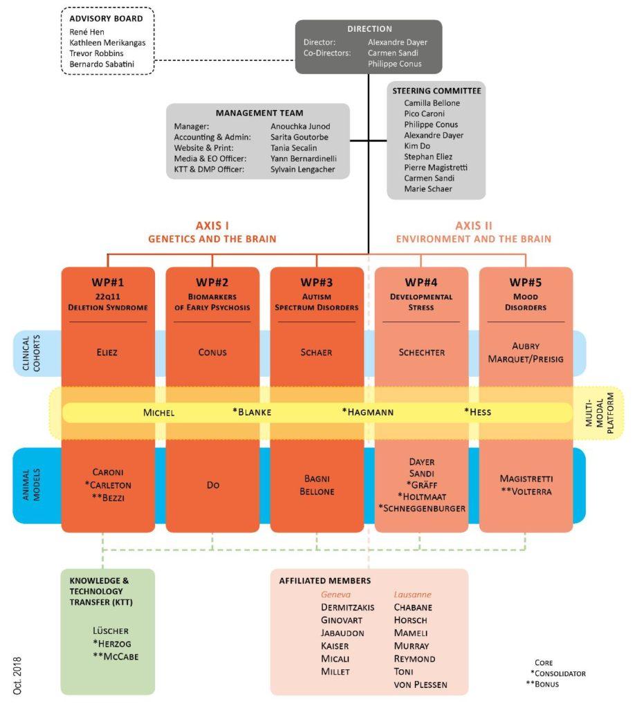 synapsy organigram phase 3